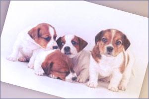 Telefono Gratuito Royal Canin
